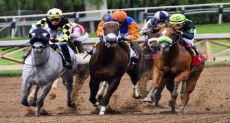Pferde bei einem Pferderennen